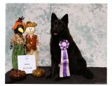 Draven a Reserve Best in Show Draven 2014.jpg